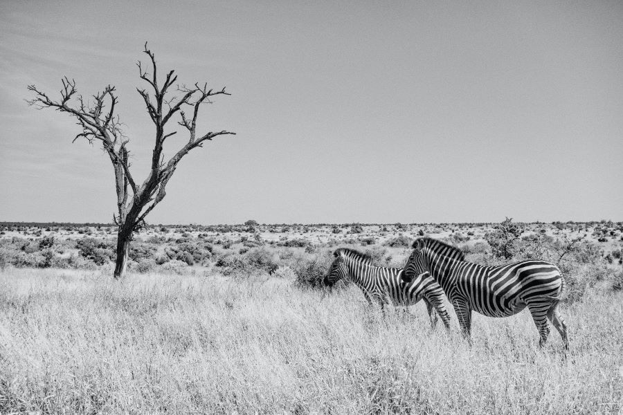 black and white photography - tone